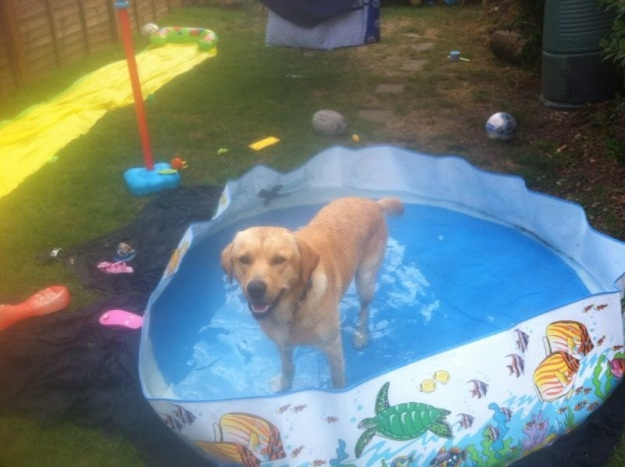 Chester cooling off!